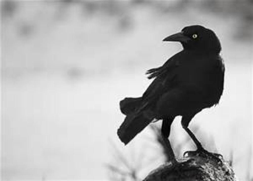 blackbird workshop